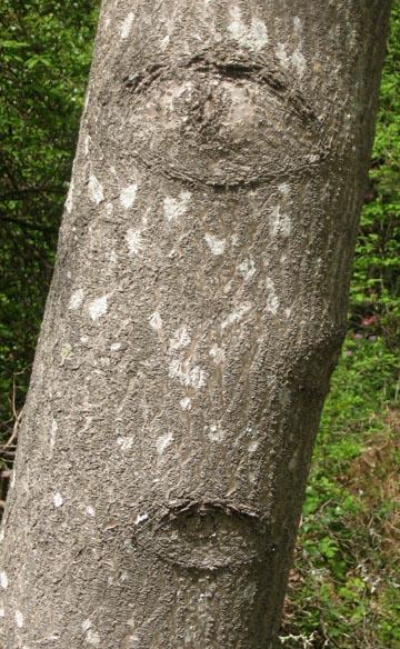 ex-treeeyessmall.jpg
